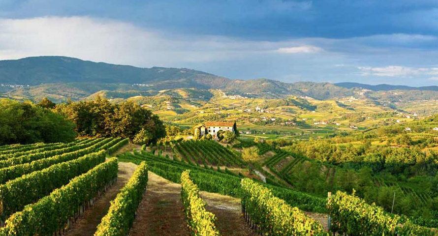 Consorzio Vini delle Venezie DOC ventures into 'second era of Italian style Pinot Grigio'