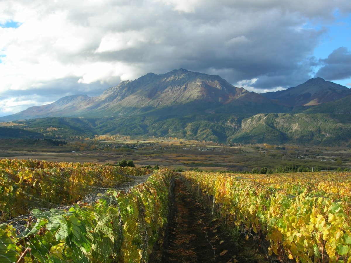 Chubut – Argentina's New Emerging Wine Region