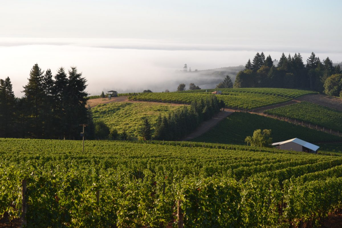 New Travel Guide for Wine Country Ontario