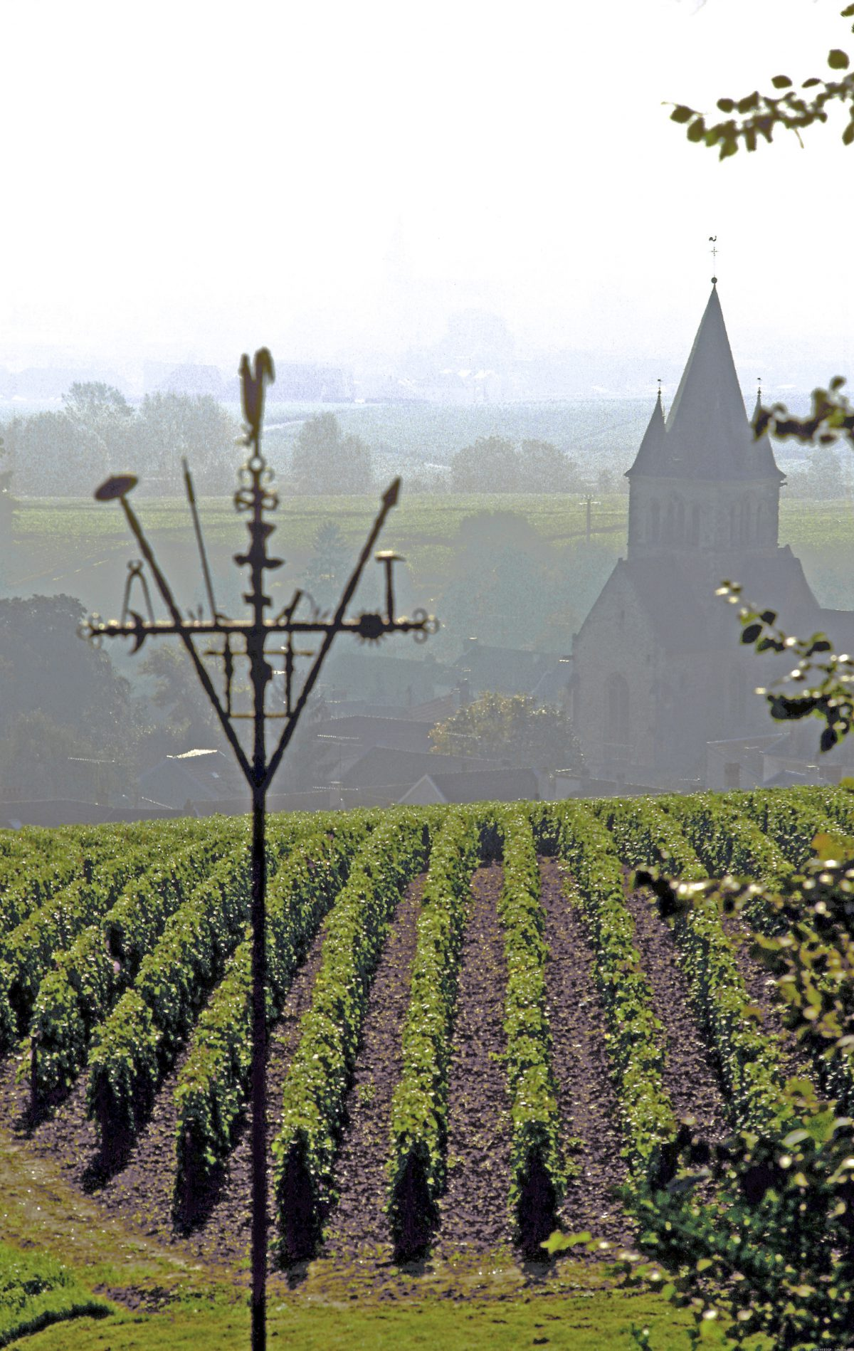 The Region of Champagne Takes the Lead on Climate Change