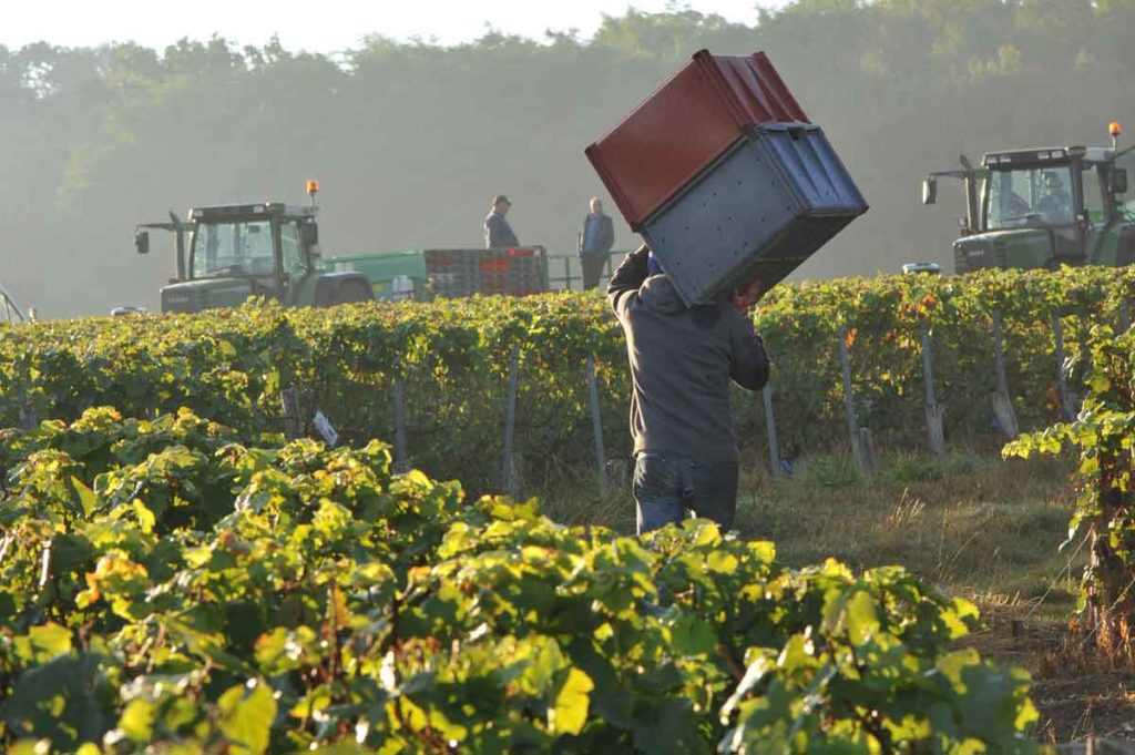 Happy International Chardonnay Day (May 25th) and What is Blanc de Blancs Champagne