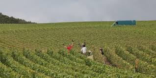 2017 Champagne Harvest