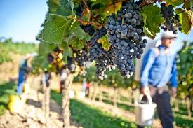 Weather Hazards Threaten Northern Italy's 2018 Harvest