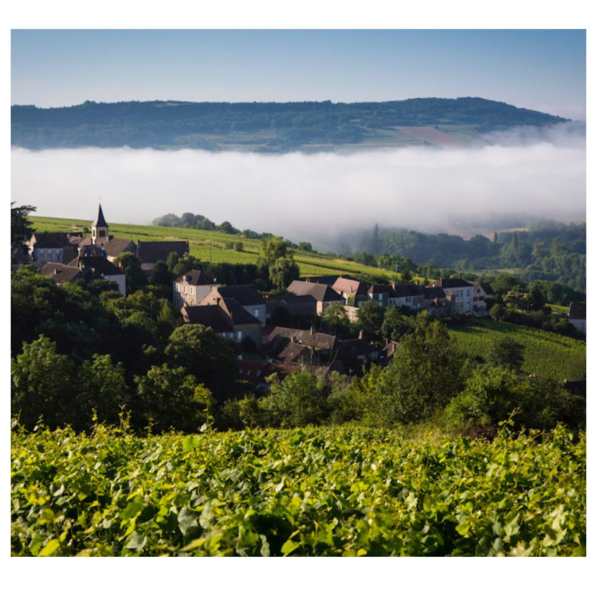 Bourgogne Wines Cave de Prestige selection for 2019