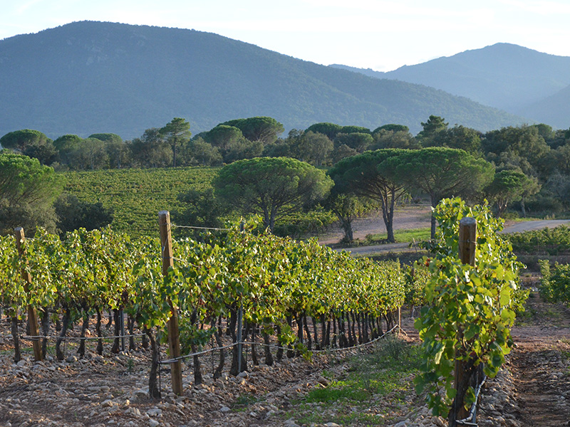 Cotes de Provence AOC reveals fifth DGC region