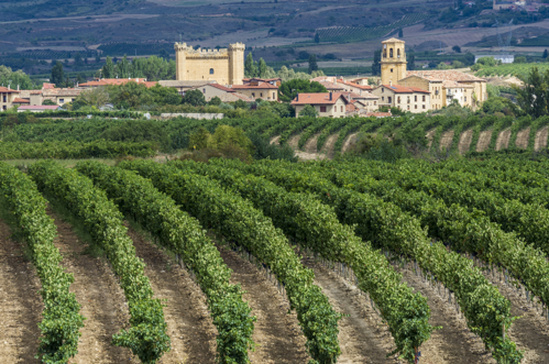 Organic wine production in Spain has grown 10%