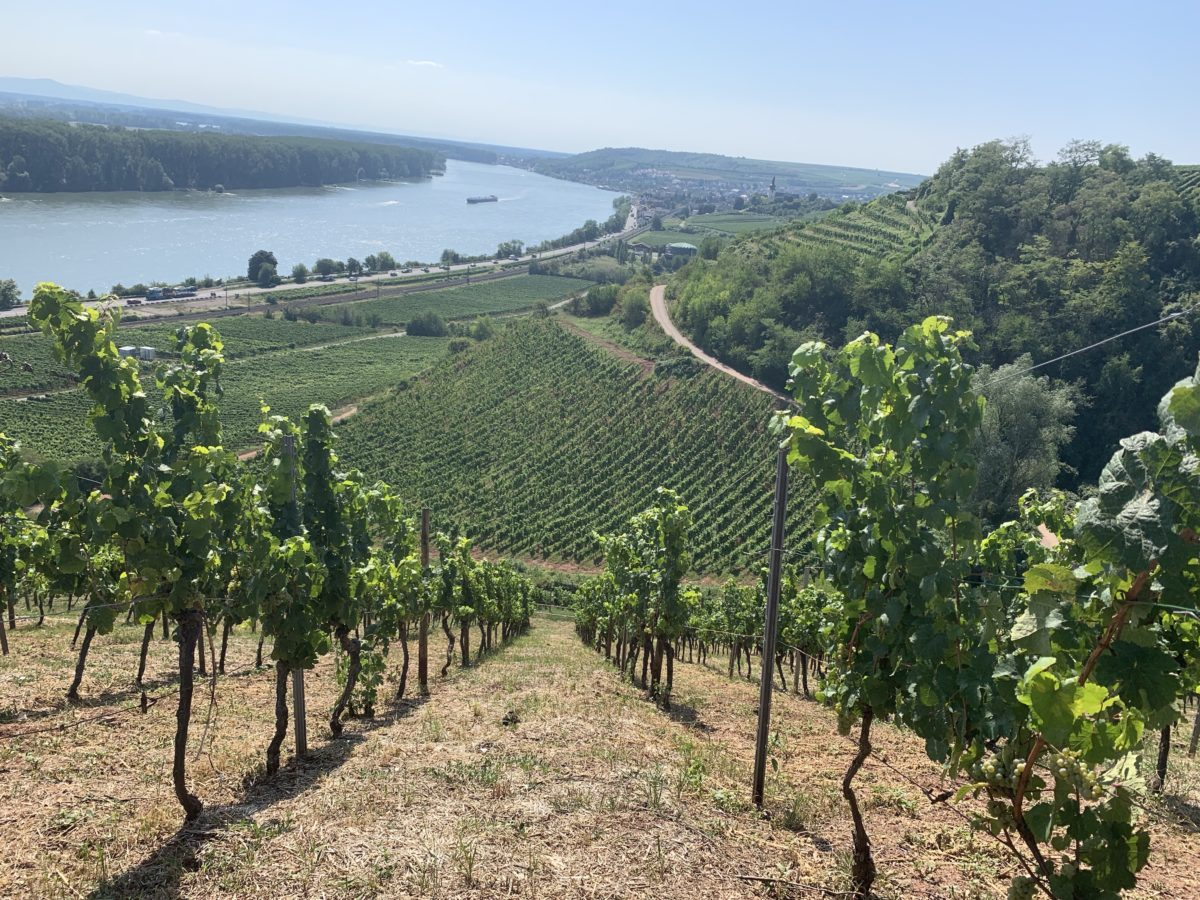 Exploring the Diversity of the Rheinhessen Wine Region [Part 1 of 3]