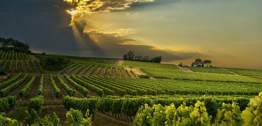 Southern French Wine Regions Announce €34M Recovery Plan
