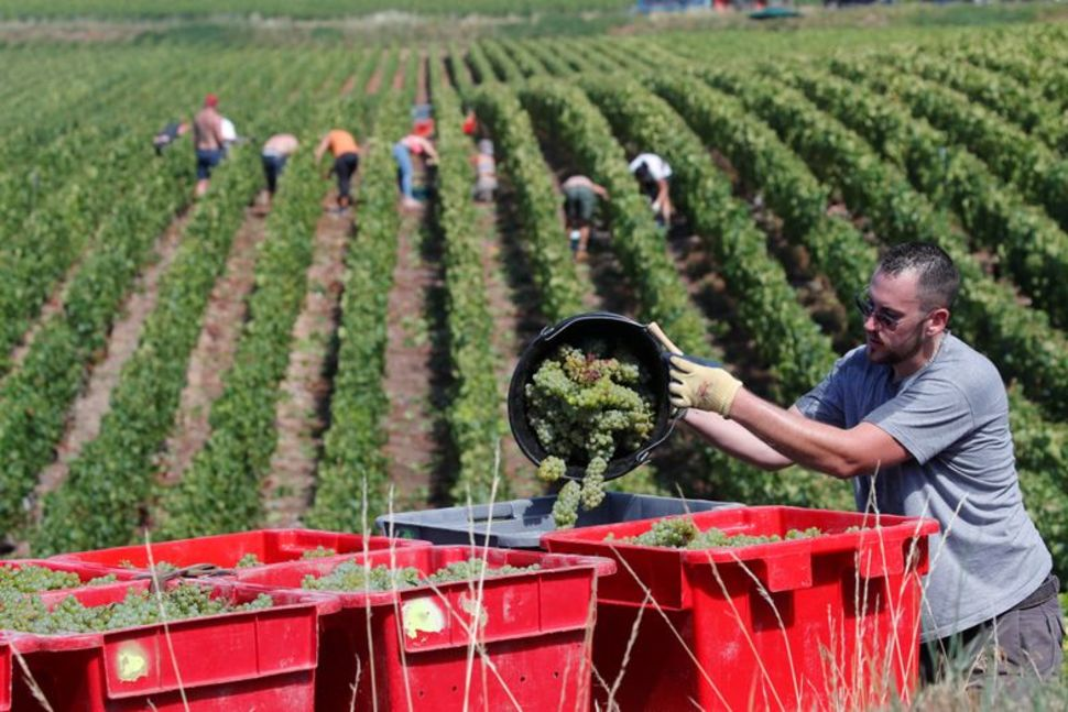 "THE CHAMPAGNE 2020 HARVEST REPORT ""SPLENDIDE!"""