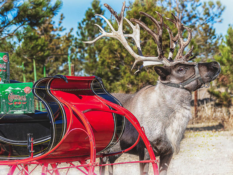 "Colorado's ""Beckenridge Brewery"" will be delivering beer by Reindeer this holiday season to 10 lucky winners"