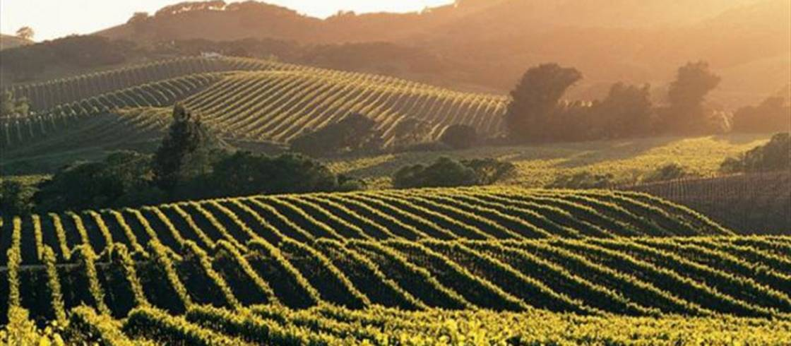 """2020 Burgundy Harvest Historically Early and """"Unforgettable"""" Vintage"""