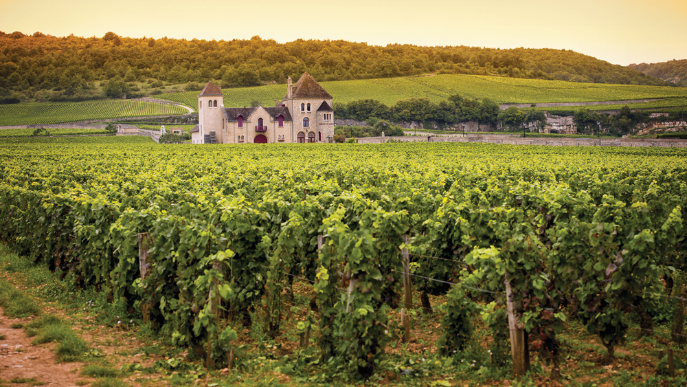 What's in a name? The Bourgogne family explains…