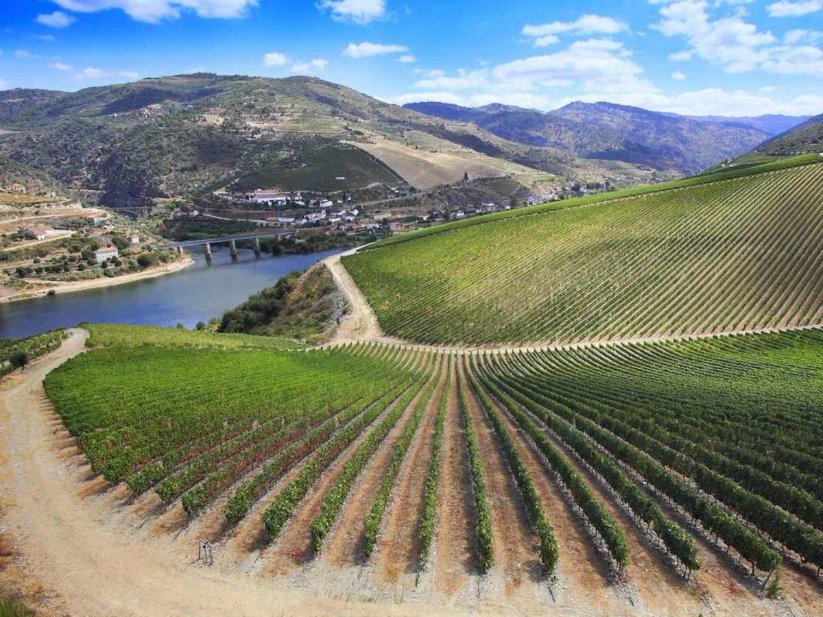 """Aranda de Duero has been named """"European City of Wine"""" for 2022"""