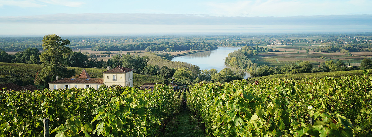 More Bordeaux Vineyards Converting to Organic
