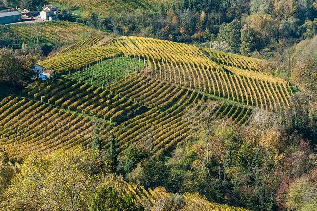 """The National Wine Committee approves the """"Canelli"""" DOCG"""