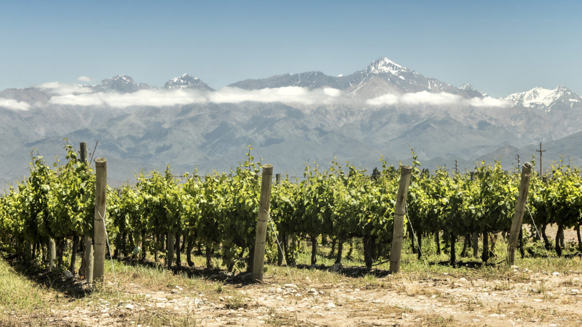 """Chile in the process of setting up an """"Organic Wine Growers' Association"""""""
