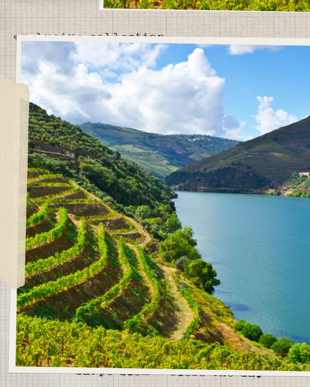 Portuguese Wine Exports Increase H1