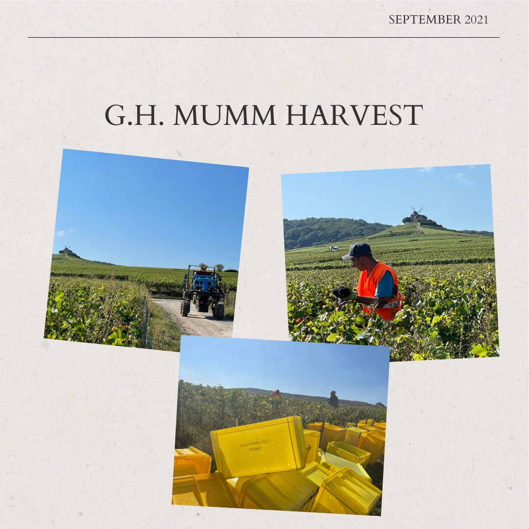 """Mumm 2021 Harvest – Part lll – """"Only the Best"""""""