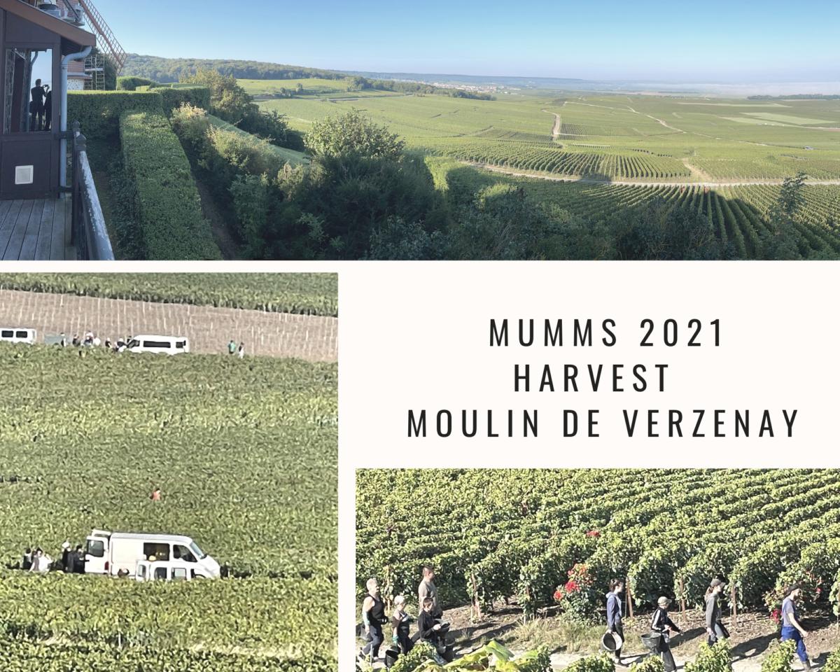Mumm 2021 Harvest – Part l – Moulin de Verzenay and Coffee