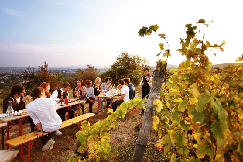The City of Vienna is the World's Largest Urban Vineyard